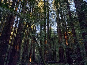 Muir Woods National Monument (47879030331).jpg