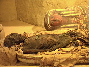 Academy of Natural Sciences of Drexel University - A mummy on display at the Academy