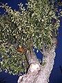 Mushroom-treeP1390917r4.jpg