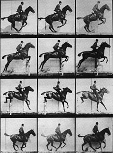 "The old jumping seat: leaning back to ""save"" the horse's legs. Note the horse's inverted frame and poor technique."