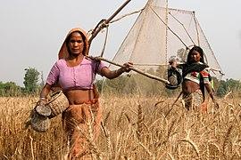 Népal rana tharu1818a Crop.jpg