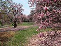 National Arboretum in April (23491071901).jpg