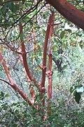 National Botanic Garden of Israel 18.jpg