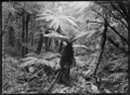 Native bush with tree ferns, a stream, and two men visible in right foreground, at Korokoro. ATLIB 273165.png