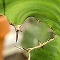 Natural Window (33819113670).jpg