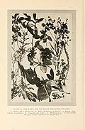 Natural history of Hawaii (Page 214) (7007407558).jpg