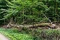 Naturbëschreservat «Beetebuerger Bësch»-112.jpg
