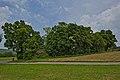 Naturdenkmal Lindenreihe und Grubbank, Kennung 82350290007, Gechingen 09.jpg