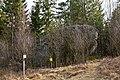 Naturdenkmal Wasserstein im Haslauer Moor.jpg
