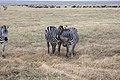 Nature of Ngorongoro Conservation Area (26).jpg