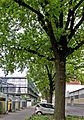 Naturschutz ,13 Stieleichen, Nordstraße ,Cottbus.jpg