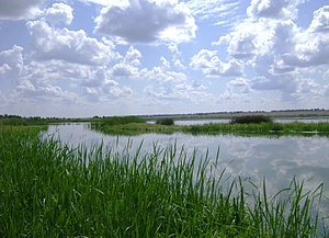 Navlinsky-raion-nature-bryansk-oblast-august-2009.jpg