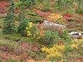 Near Myrtle Falls mid September 2015. (f728e4291b8f4d429a464fbf59595415).JPG