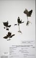Neuchatel Herbarium Types NEU000113015.tiff