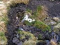 Nidd Head Spring - geograph.org.uk - 650649.jpg