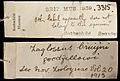 Non-original tag of Zaglossus BMNH 1939.3315 - ZooKeys-255-103-g009.jpeg