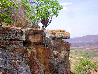 Caatinga - Caatinga in Pernambuco, Brazil.