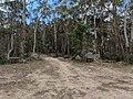 North Black Range Track at Forbes Creek and Palerang, New South Wales.jpg