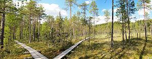 Duckboards - A nature trail made from duckboards in Nyrölä, Jyväskylä, Central Finland