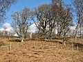 Oak woods, Aulich Hill - geograph.org.uk - 376153.jpg