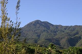 Sierra Madre de Oaxaca pine-oak forests