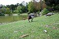 Oiseaux près du lac du parc Montsouris.jpg