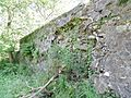 Old Laigh Borland walled garden, Dunlop, East Ayrshire, Scotland. Rear wall exterior.jpg