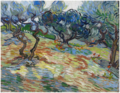Olive Trees .PNG