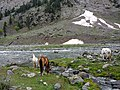 """On the way to mahodhand Lake this place name is """"Shifa chashma"""".jpg"""