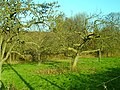 Orchard by the railway line - geograph.org.uk - 302762.jpg