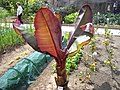 Ornamental Banana plant - geograph.org.uk - 1425863.jpg