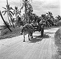 Ossenwagen in de buurt van Lelydorp in Suriname, Bestanddeelnr 252-5547.jpg