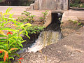 Outgoing freshwater medium.jpg