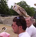 Owl Boudewjinpark.JPG