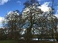Oxford, UK - panoramio (112).jpg