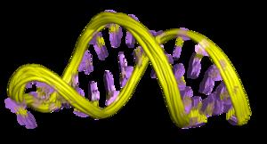RNA thermometer - Image: PDB 2gio EBI