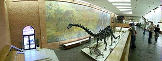 Moscow Paleontological Museum - One of the halls of the museum