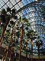 Palm trees in Winter Garden Atrium.jpg