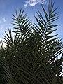 Palme im Himmel.jpg