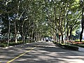Pandeng Road in East China University of Science and Technology.jpg