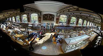 Gallery of Paleontology and Comparative Anatomy - Image: Panorama Galerie Anatomie Comparee