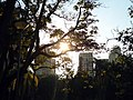 Parque Municipal Americo Renne - panoramio (2).jpg
