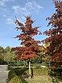 Parque del Retiro, en Madrid en otoño.jpg