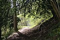 Path up Hollybush Hill - geograph.org.uk - 779727.jpg