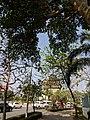 Patuxay in under a tree.jpg