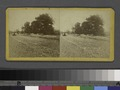 Paving of Lenox Ave. north of Central Park (NYPL b11708034-1530686).tiff