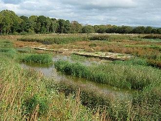 Westhay Moor - Peat Bog at Westhay