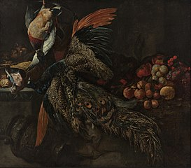 Still life with a dead peacock