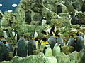 Penguins Loro Parque 06.JPG