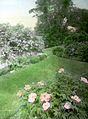 Peonies and other plantings (5168280858).jpg